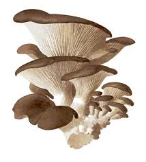 Top 10 Benefits Of Mushrooms