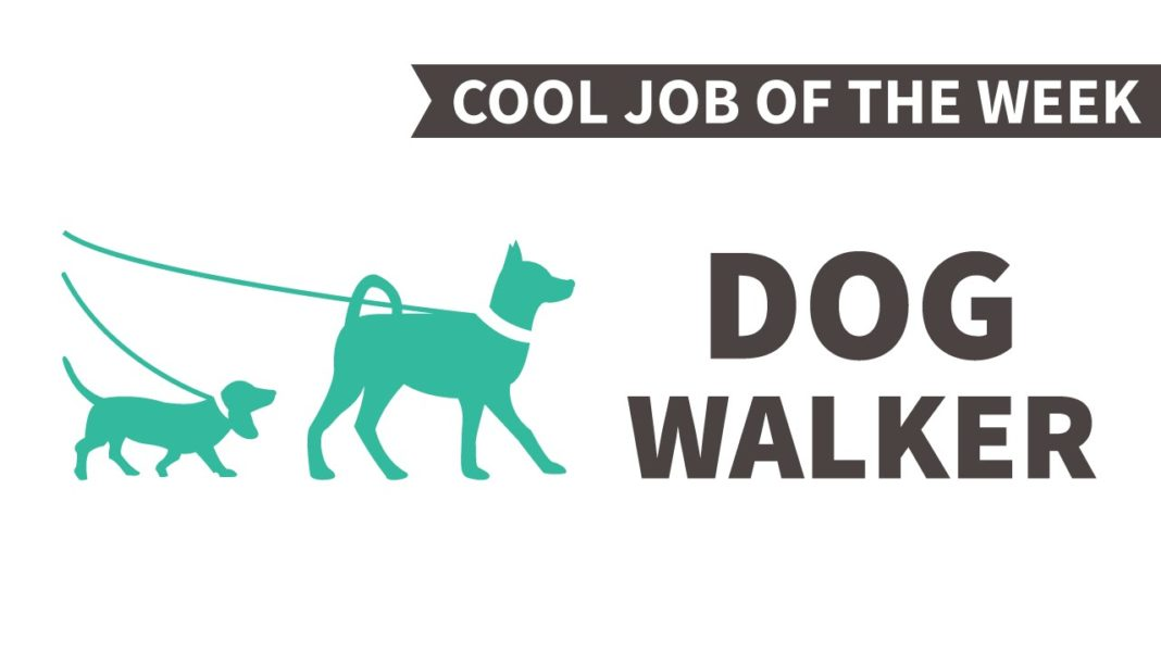 how to start walking dogs for money