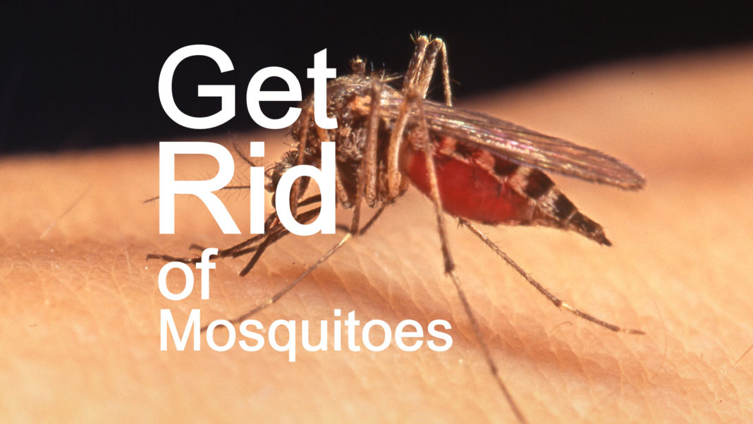 Home Remedies To Get Rid Of Mosquitoes At Home Anextweb